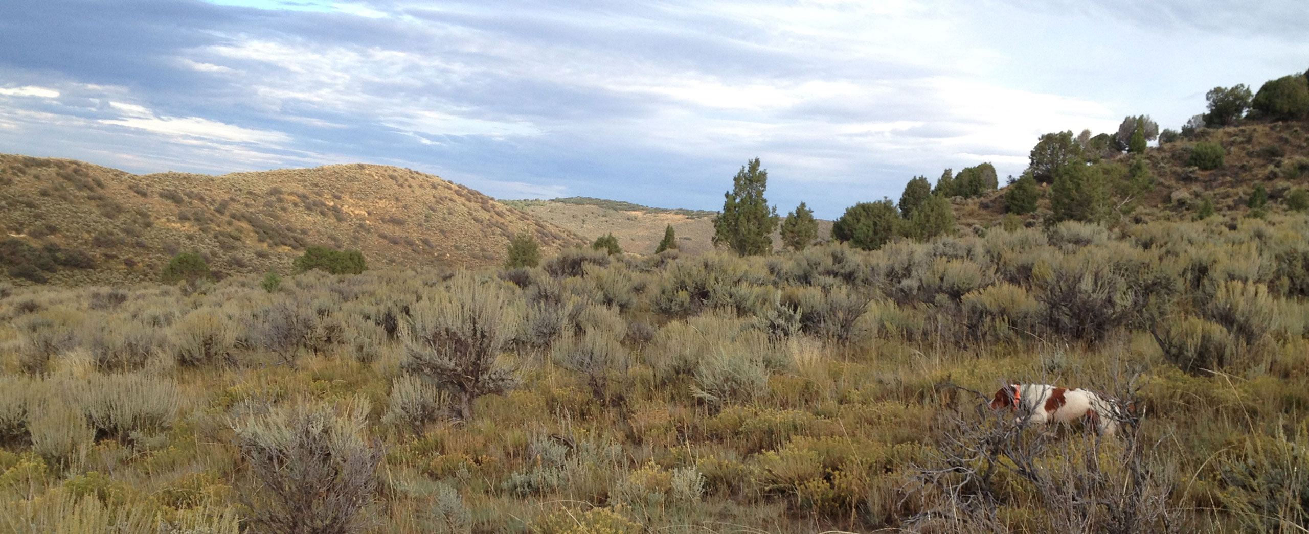 http://75.103.90.230/wp/wp-content/uploads/2014/08/slideshow-sagebrush.jpg